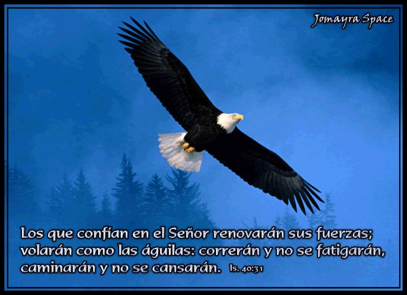 El Águila y La Tormenta.... - Amigos Cristianos - Gabitos