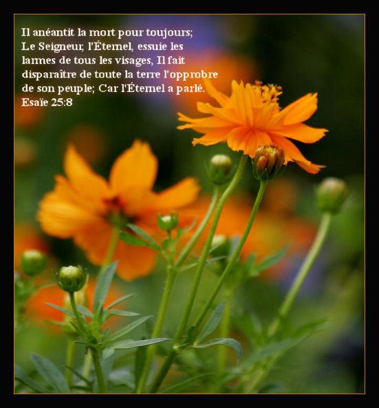 Verset bibliques - Verset biblique consolation ...
