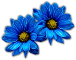 https://www.gabitos.com/NancyNangel/images/florazul.png