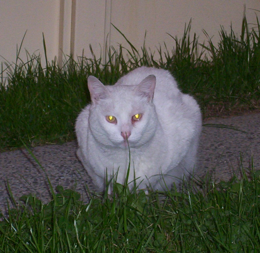 Mi bilyto amado ha partido el maravilloso mundo de for Ahuyentar gatos de mi jardin