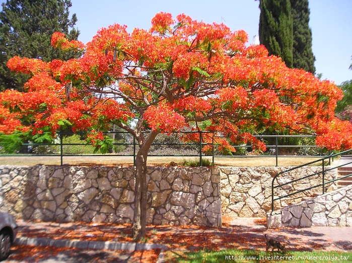 amigos para siempre rboles ornamentales silvicultura