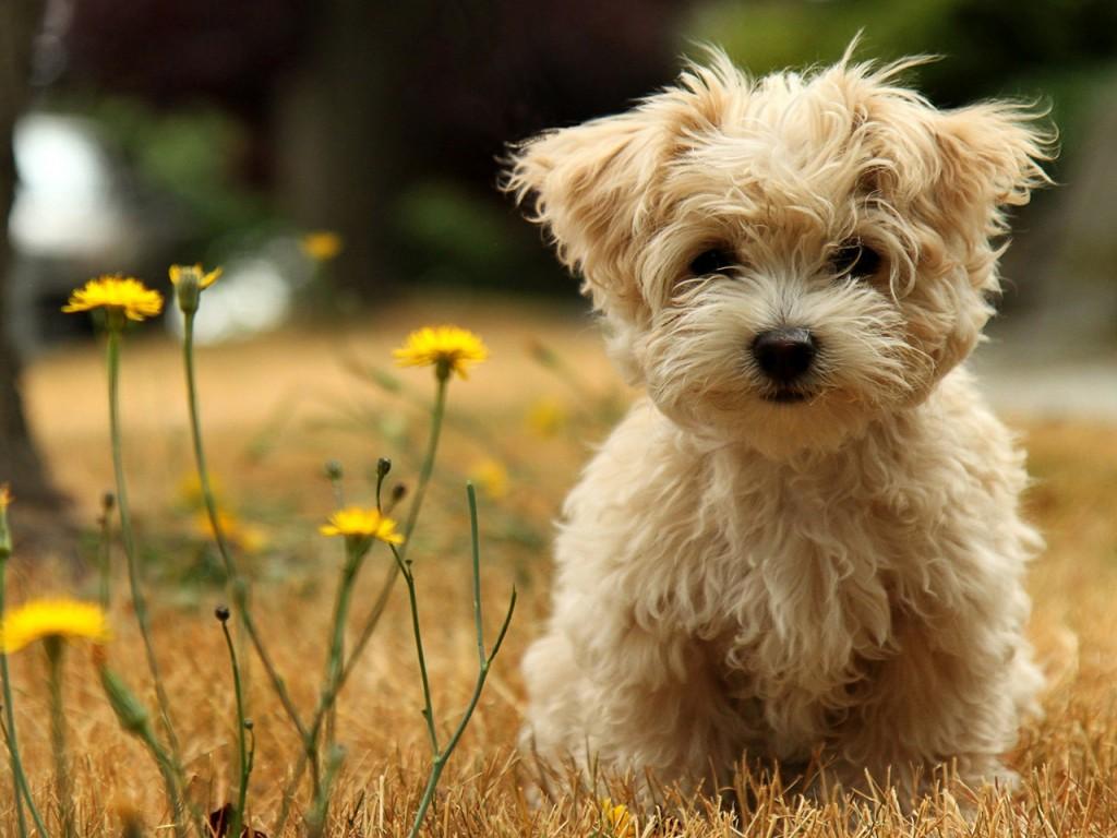 Animales y perros animales salvajes for Fondos de pantalla de perritos