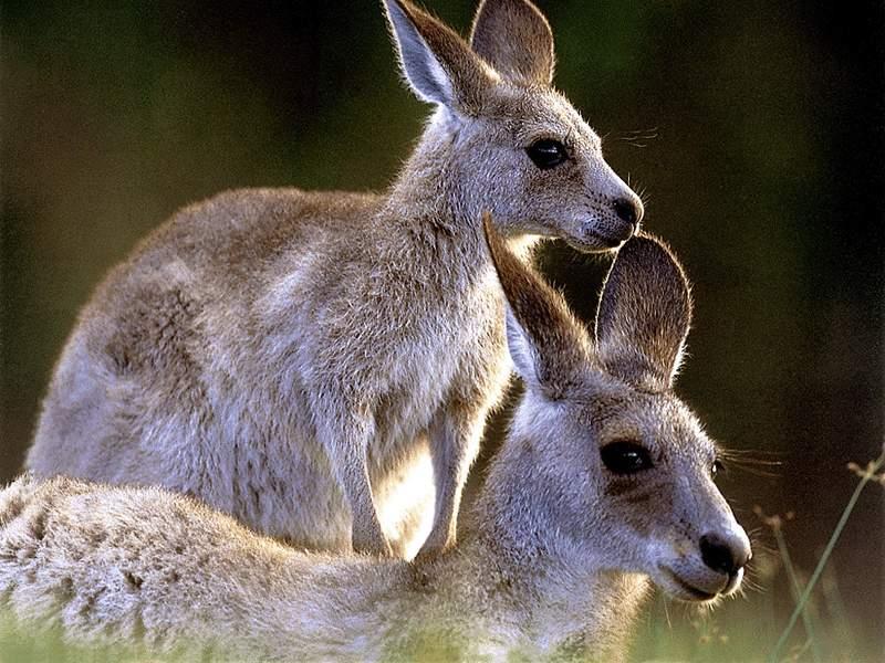 Australian australia study scholarships