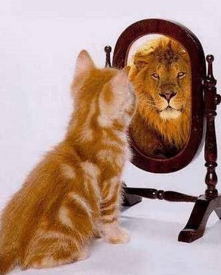 Gato refleja leon en espejo lossalmones 2 gabitos for Espejo que no se empana